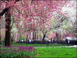 Spring, Madison Square Park